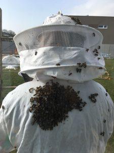 Bienen auf imkeranzug nach der Durchschau im Frühjahr