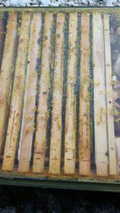Wintereinbruch bei den Bienen