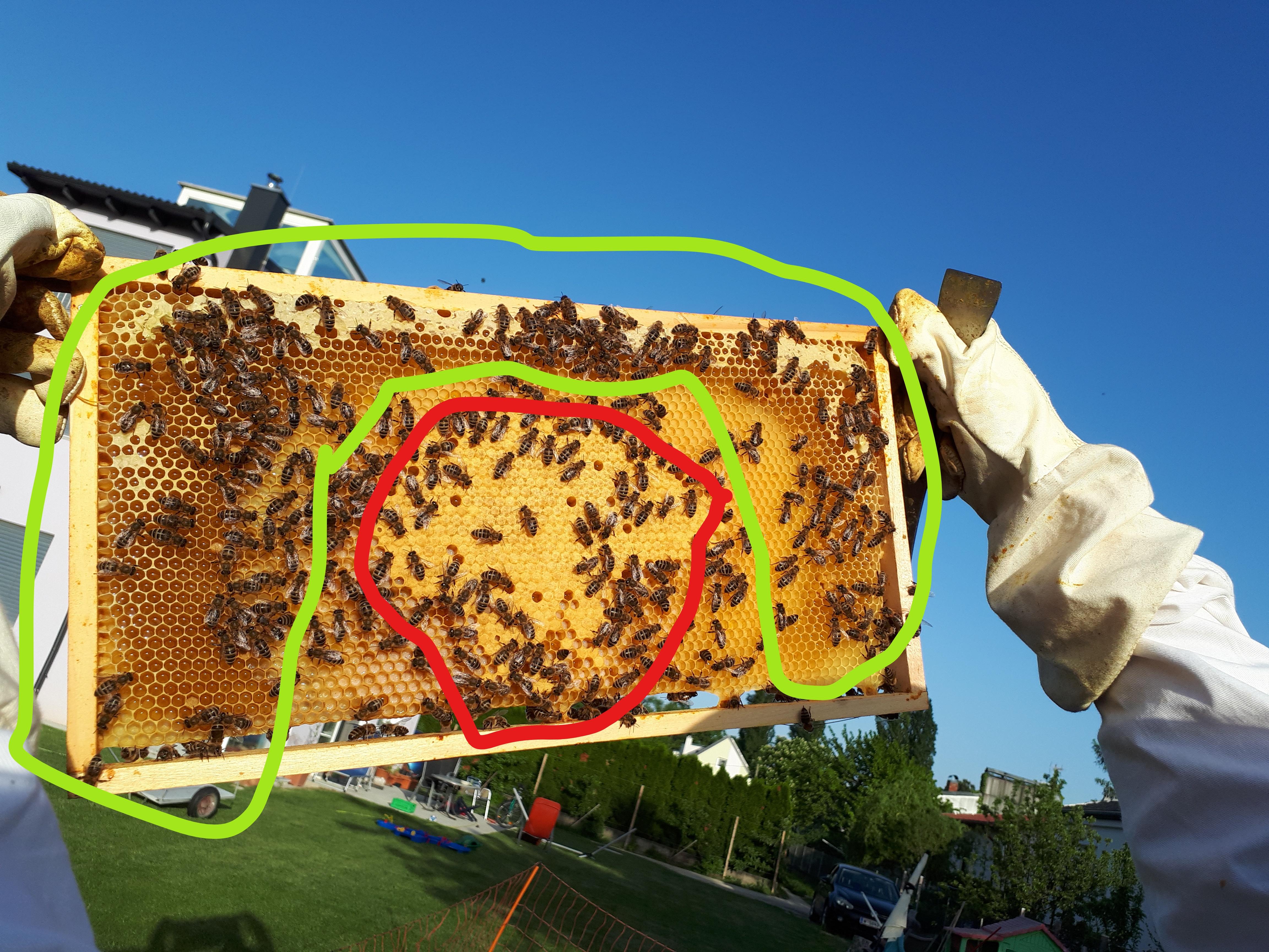 Brutraum verhonigt weil zu Spät den Honigraum aufgesetz